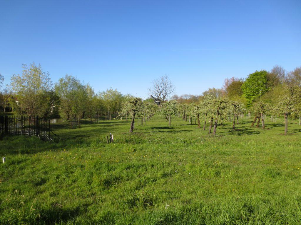 Perenboomgaard bij Oudegeinse Poldermolen